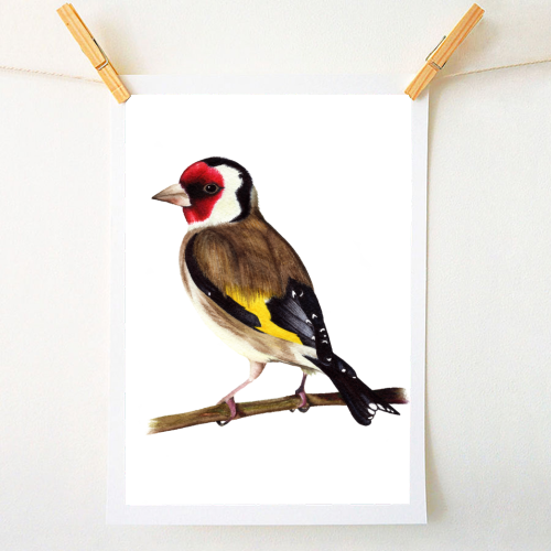 Goldfinch - unique art prints on ART WOW