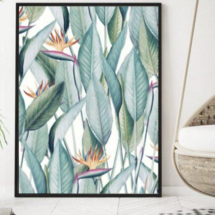 House plants images